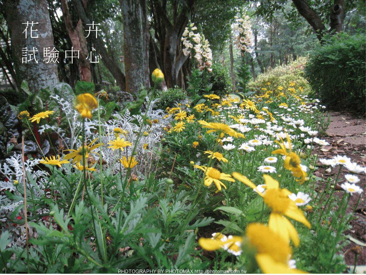 花卉-01-min