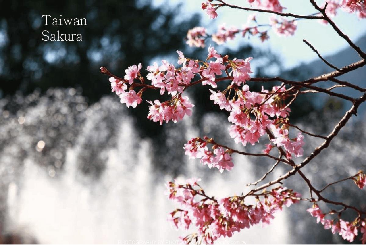 櫻花內頁-01-min
